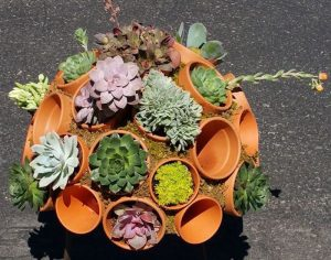 How to grow your own clay pot succulent sphere