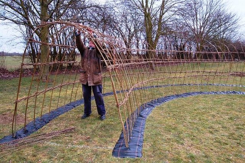 Living Willow Fence Panels Living Willow Hedges Nifty Homestead
