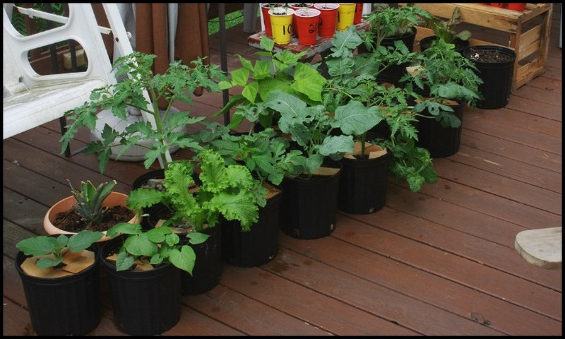 Vegetables in Container Pots