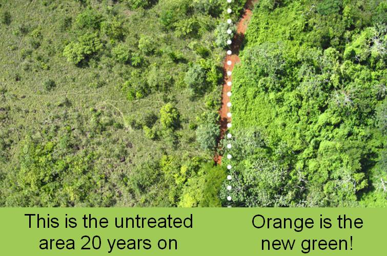 Lush vegetation on the land treated with orange peels.