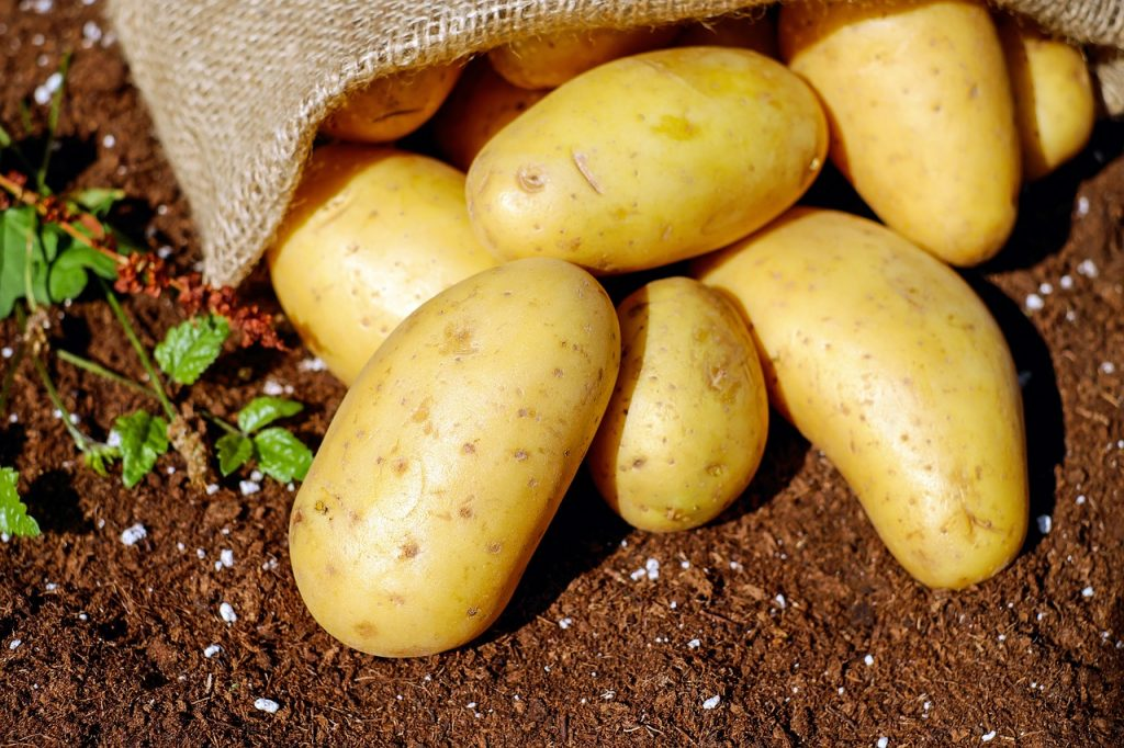 Growing potatoes is nearly impossible to mess up!