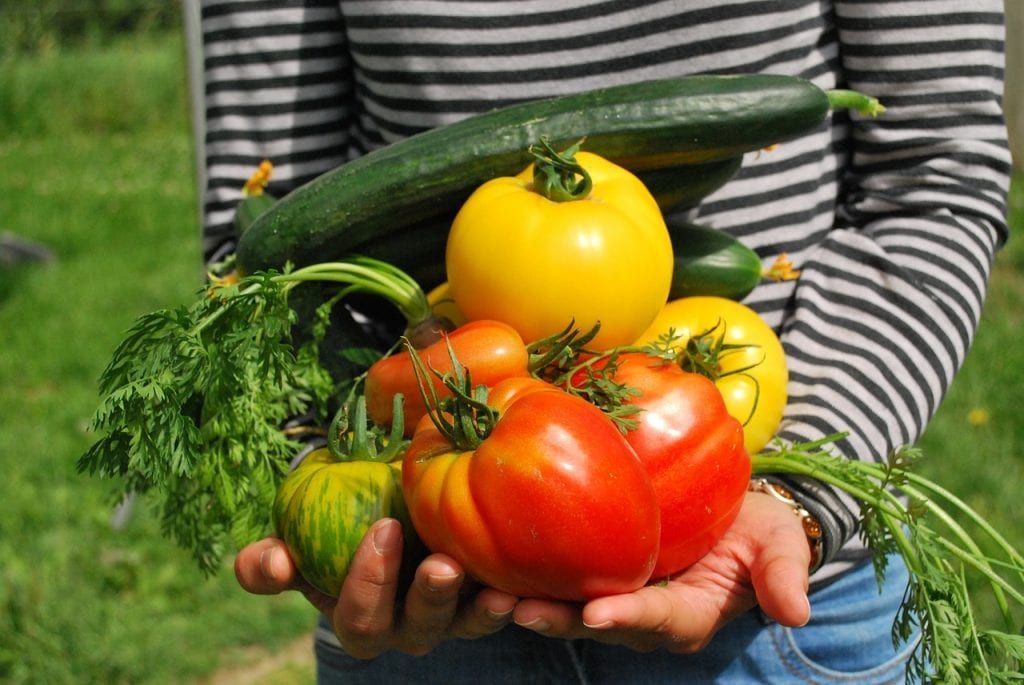 Thinking of starting your own vegetable garden? Do it!