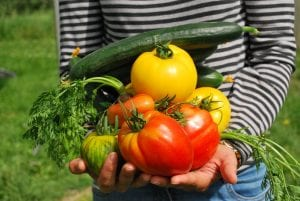 5 Vegetables to Grow for Beginners