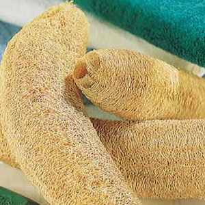 How to Grow Luffa for Sponges