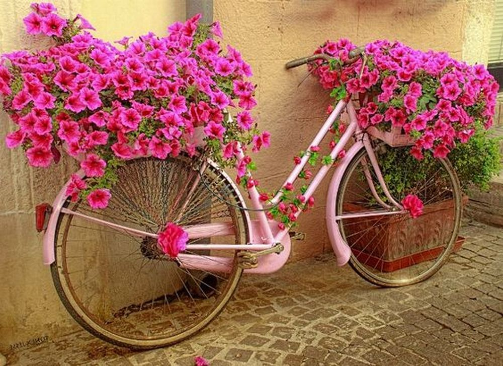 Turn an old bicycle into this gorgeous planter!