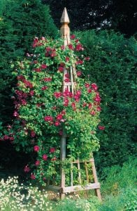 They're beautiful on their own but wait until you see vines start to climb up them.