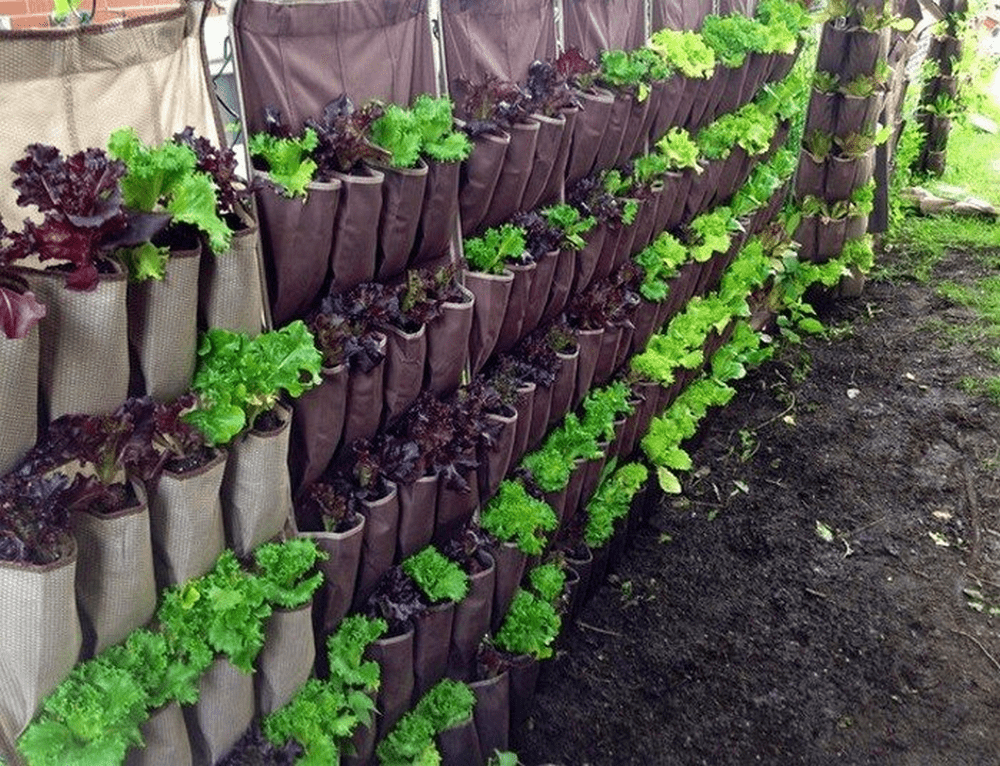 Not enough ground space for a garden? Go vertical!