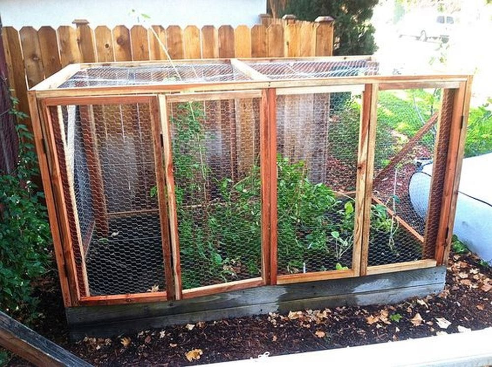 Adding screens to your raised garden beds will help keep unwanted animals away from your plants.