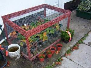DIY Strawberry Cage