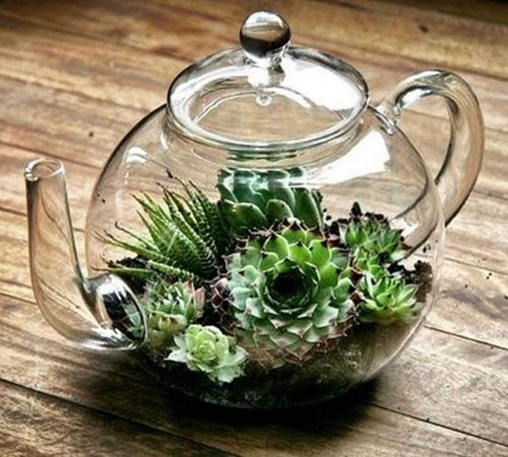 A succulent terrarium is a great way to add a bit of greenery inside your home.