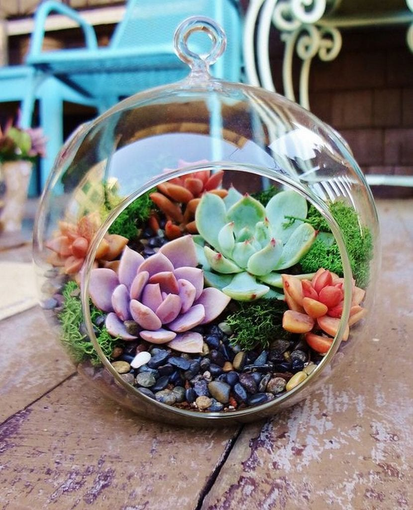 How to Grow a Succulent Terrarium