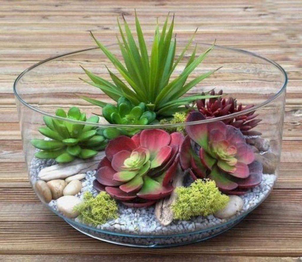 When properly cared for, these succulents can be a great source of joy.