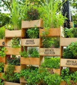How to Build a Vertical Box Planter