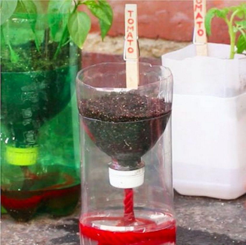 Plant De Menthe En Pot how to make self-watering seed starter pots – the garden!