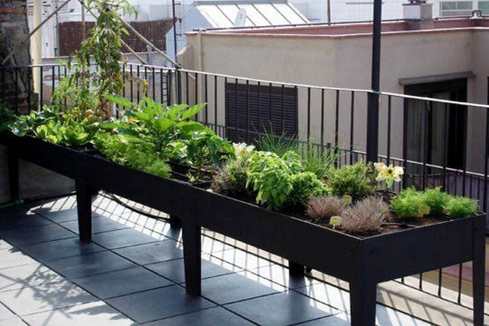 You get easy access to fresh veggies straight from your balcony!