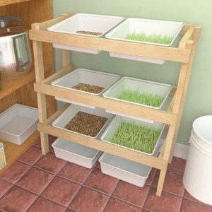 How to Build a Fodder System For Your Livestock