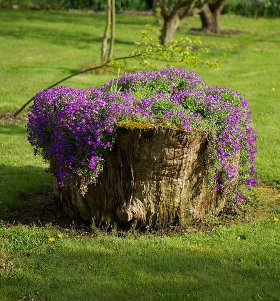 How to Turn a Tree Stump into a Beautiful Planter