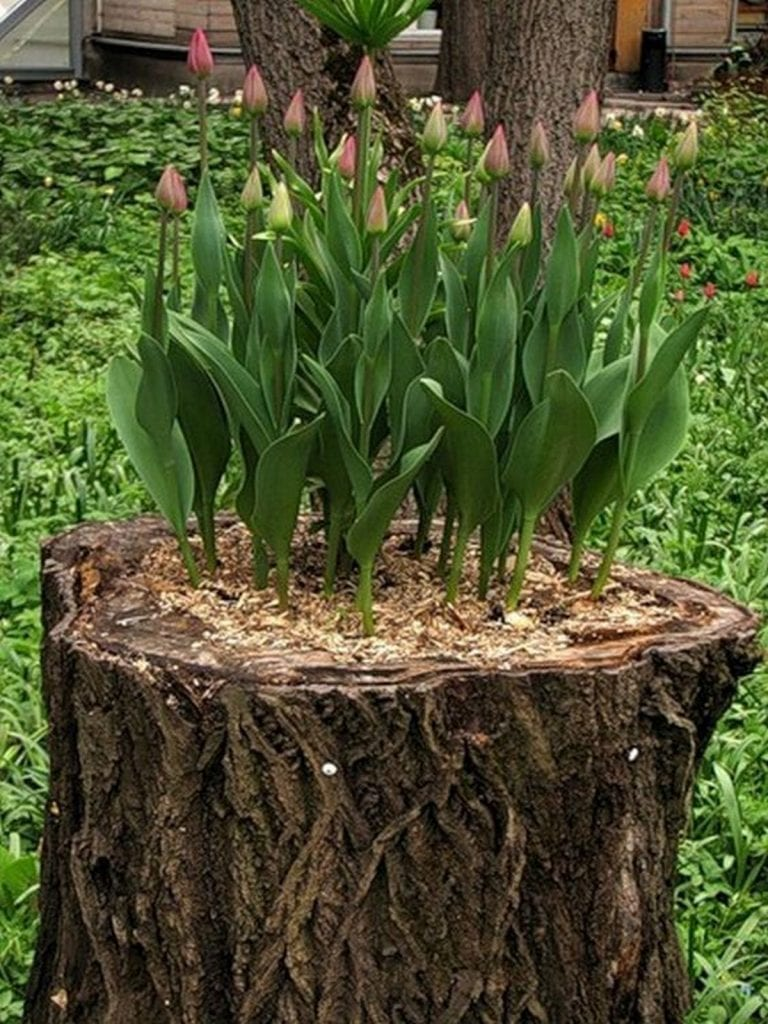 How to Turn a Tree Stump into a Beautiful Planter | The ...