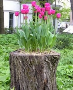 Scratching your head because you don't know what to do with a tree stump? Turn it into a planter!