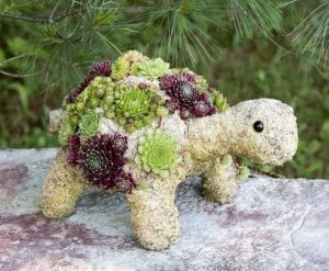 How to Make a Turtle Topiary