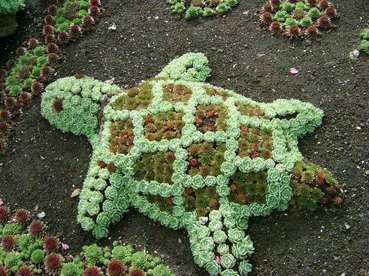 How To Make A Turtle Topiary The Garden