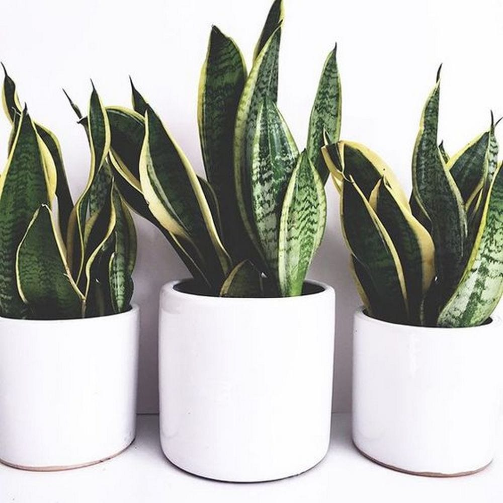 5 Best Houseplants That Can Grow in Your Bathroom