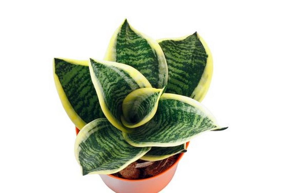 Aside from being ornamental, some bathroom plants help clean out toxins from the air.