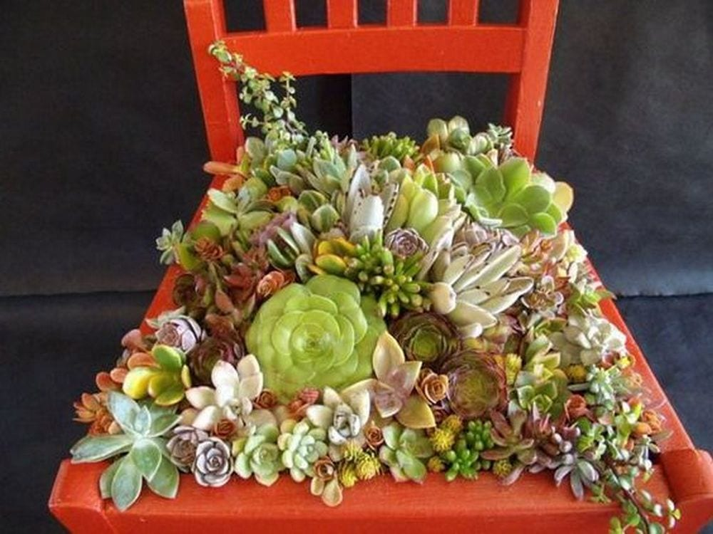 This succulent chair will be a beautiful and charming addition to your garden.