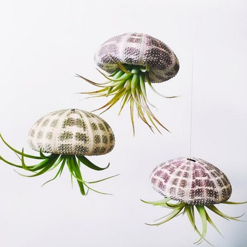 DIY Jellyfish Air Plant
