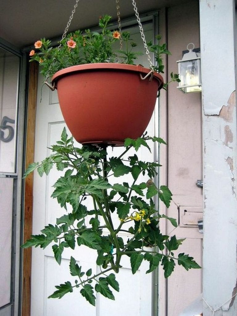 Grow Your Own Upside Down Tomato Planter
