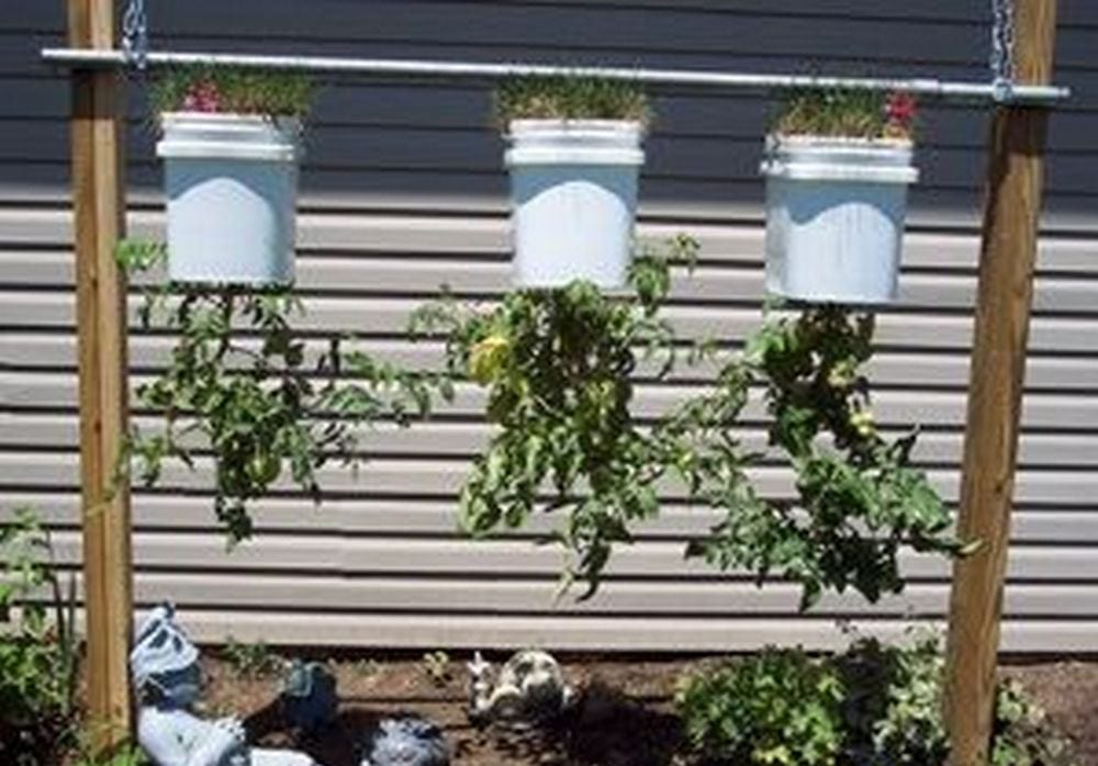 This space-saving technique will benefit those with limited garden space.