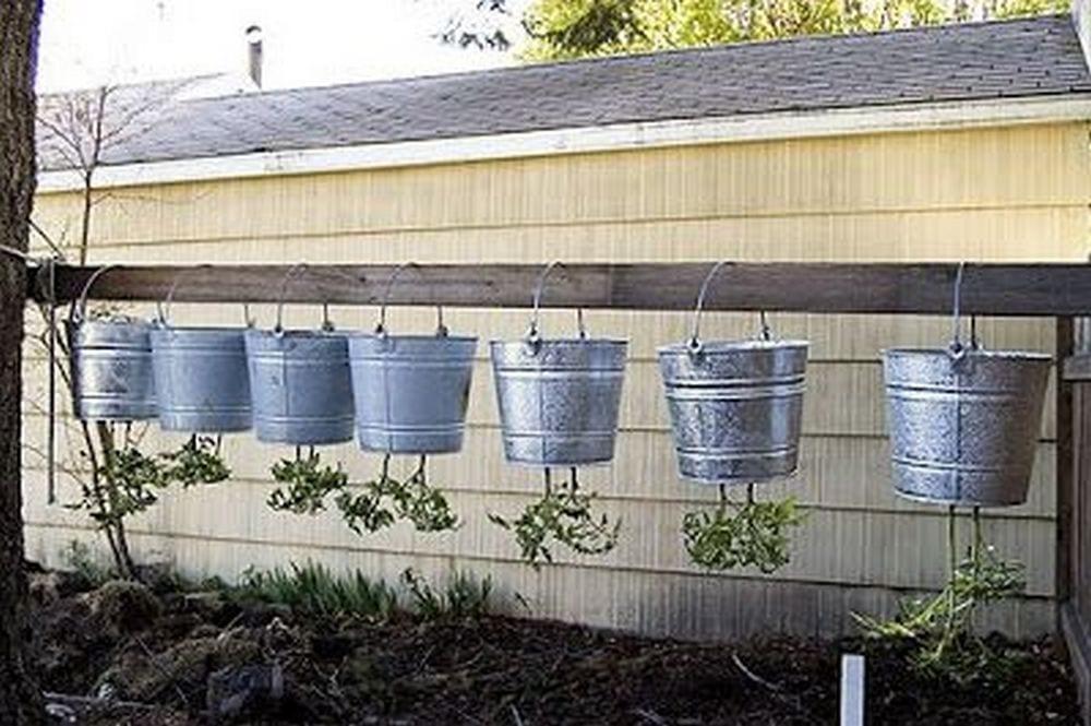 Use a 5-gallon bucket to make upside-down tomato planters!