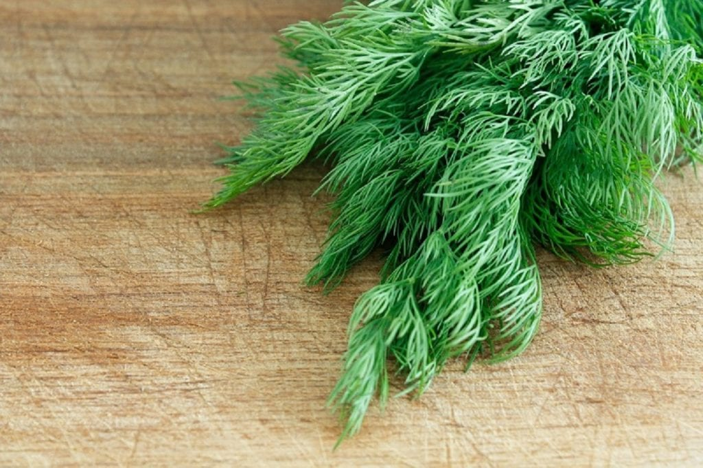The best way to enjoy fresh dill is by growing the herb in your garden.