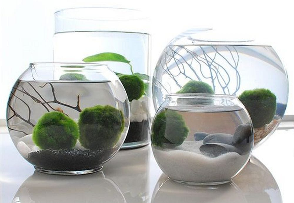 Indoor water gardens will automatically brighten up any space in your home or office.