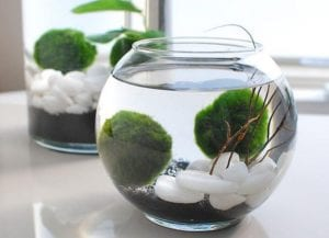 How to Grow an Indoor Water Garden