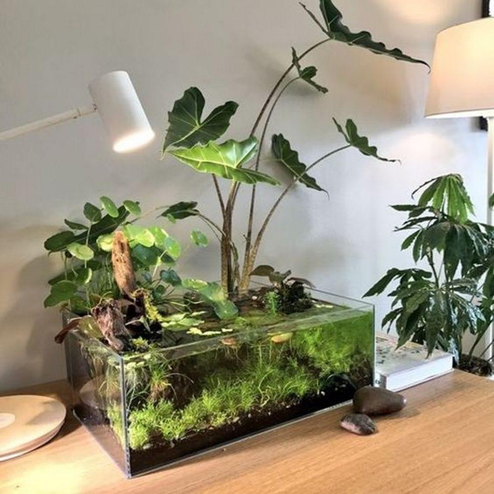 How to Grow an Indoor Water Garden   The garden