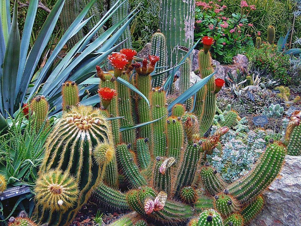 The Basics of Xeriscaping