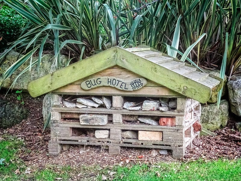 You can build and install a bug hotel in your backyard or garden.