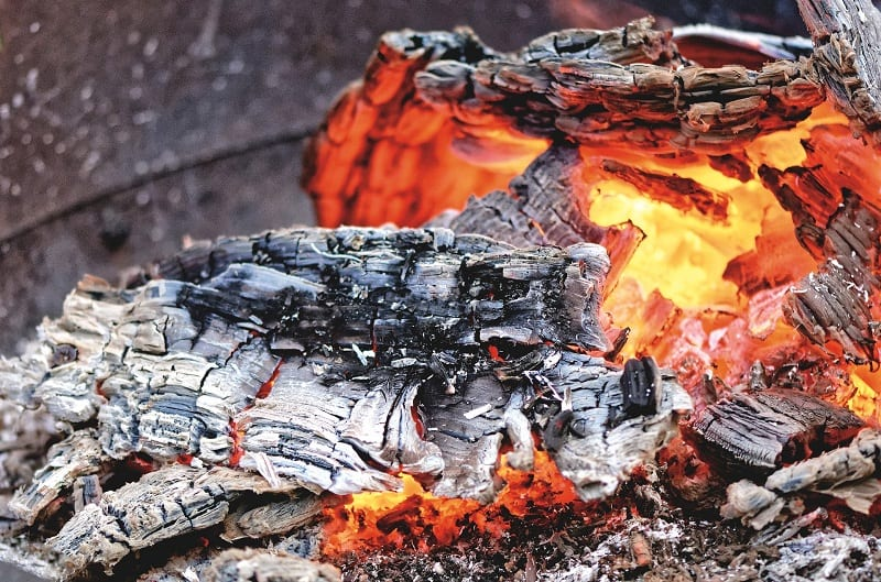 Don't use wood ash around acid-loving plants such as blueberries, holly, rhododendrons, and azaleas.