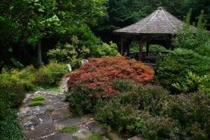 Design Your Healing Garden