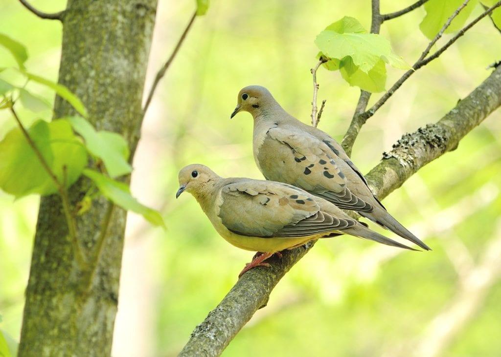 4 Easy Ways to Invite Birds into Your Garden