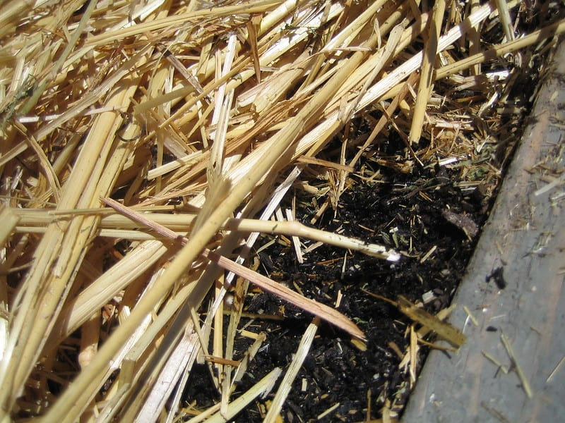 In no-till gardening, mulching replaces digging.