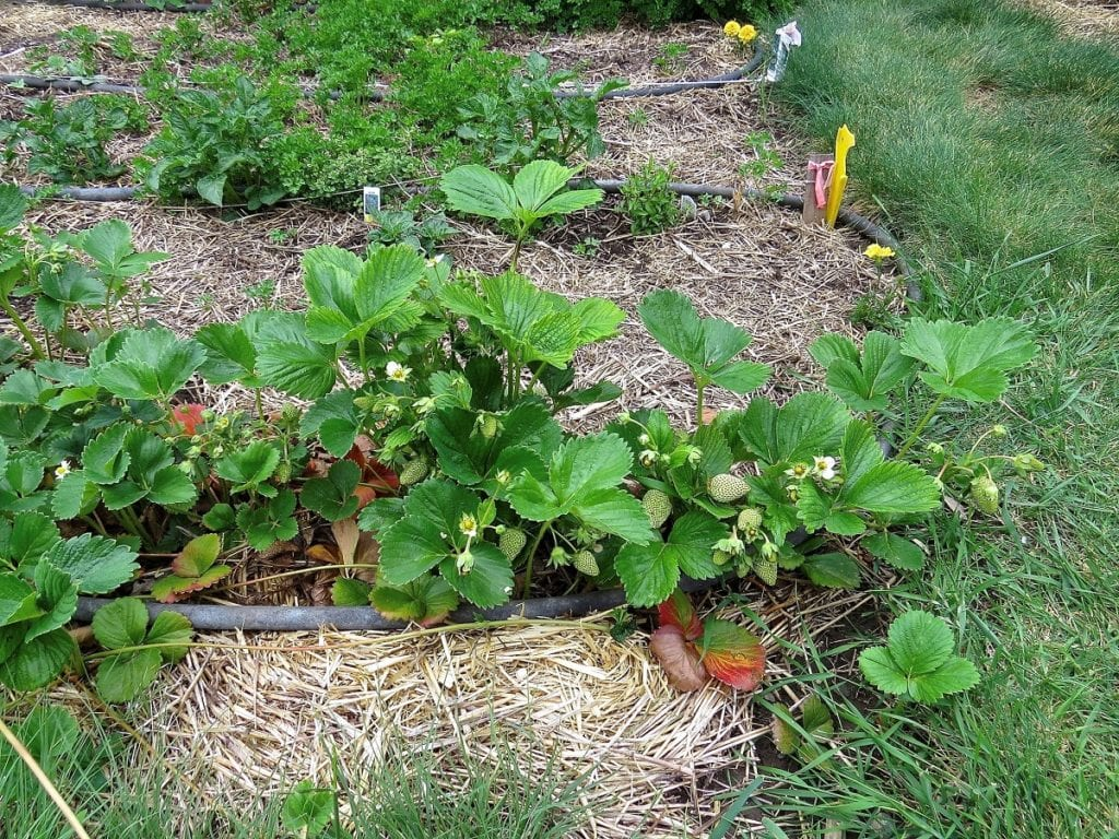 'No-till' or 'no-dig' gardening is gaining popularity among so many gardeners across the world.