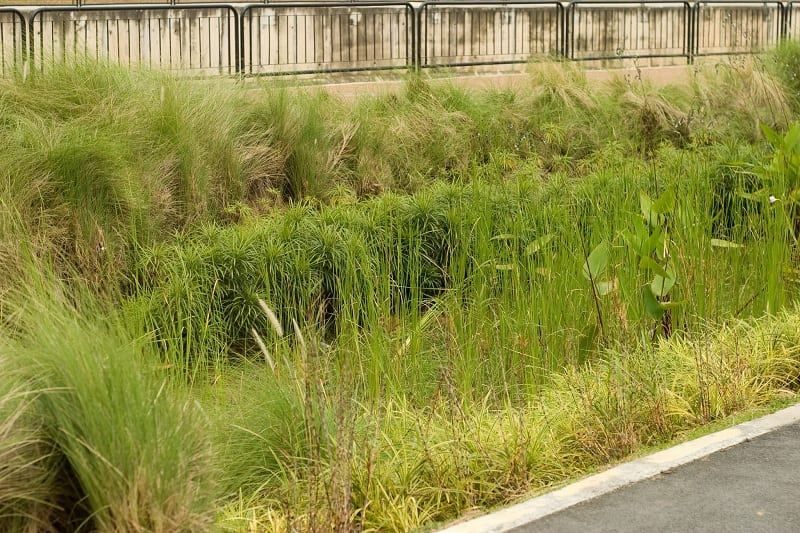 Rain gardens can filter pollutants in runoff and provide food and shelter for butterflies, birds, and other wildlife.
