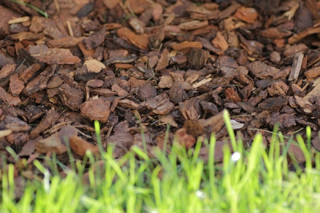 All You Need to Know About Mulch