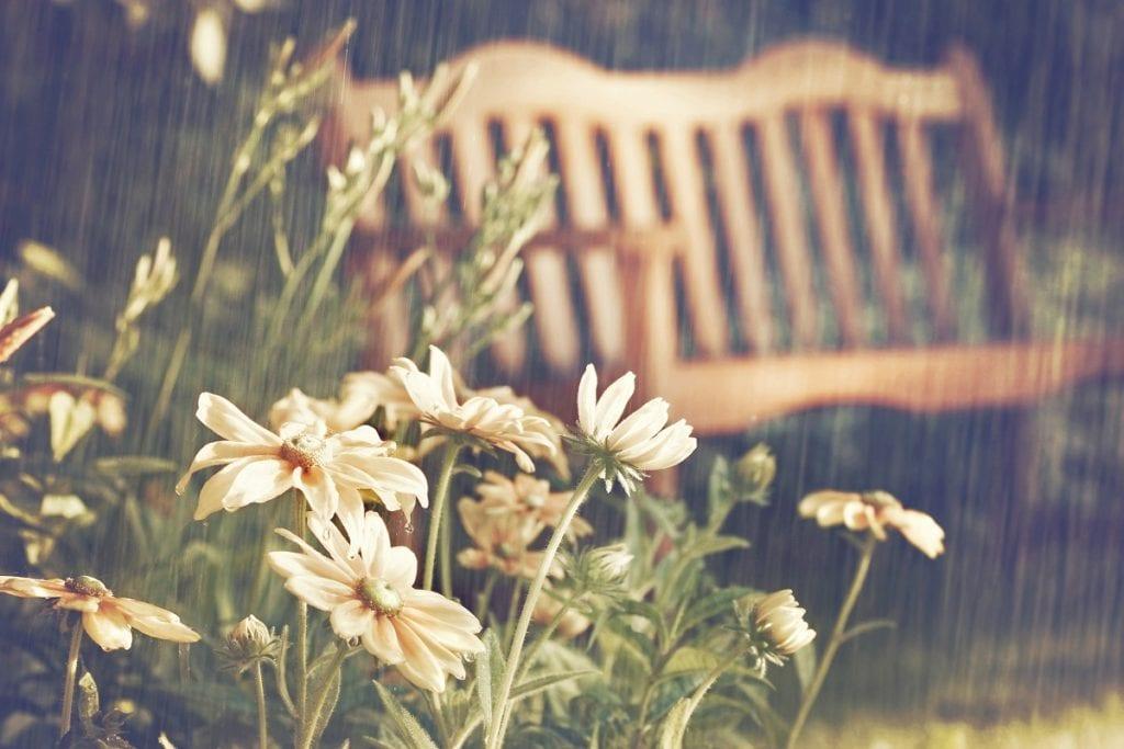 How to Start a Rain Garden