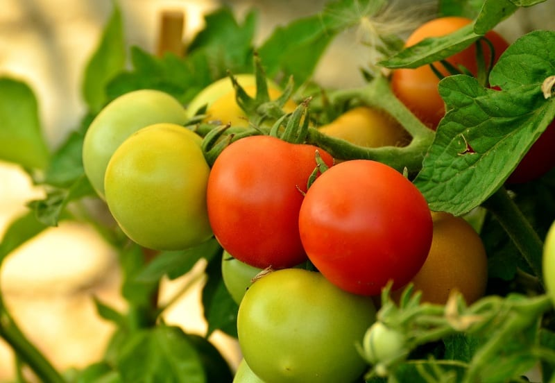 Most crops can use a potassium increase. This is especially true of tomatoes.