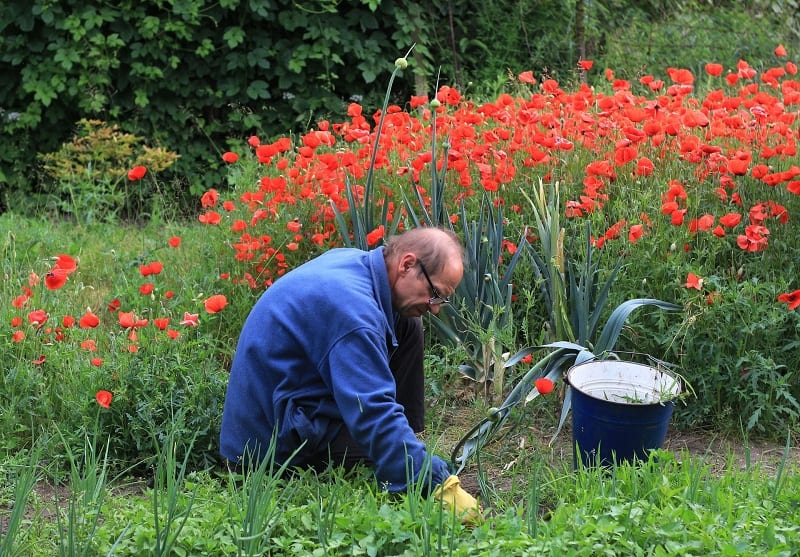 Once you've chosen an area for your garden, clear away any plants, grass, or weeds.