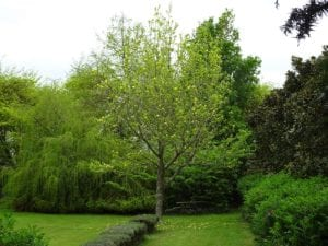 A Beginner's Guide to Planting a Tree