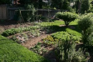 How to Start a Backyard Vegetable Garden: Tips for Beginners